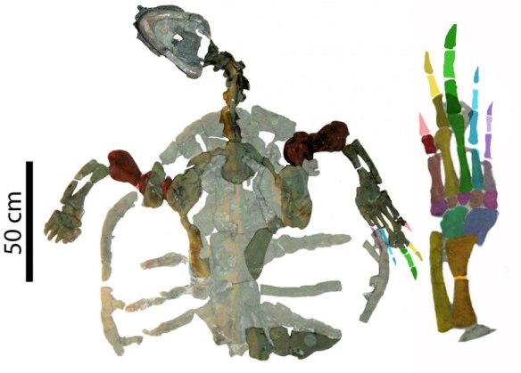 Figure 2. Desmatochelys padillai at 120 mya, the oldest known sea turtle.