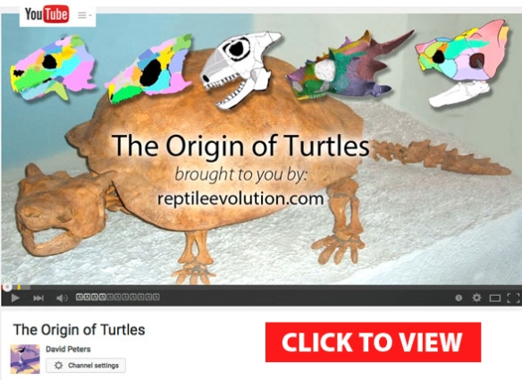 Figure 1. A new YouTube video on the origin of turtles has just been launched. Click to view