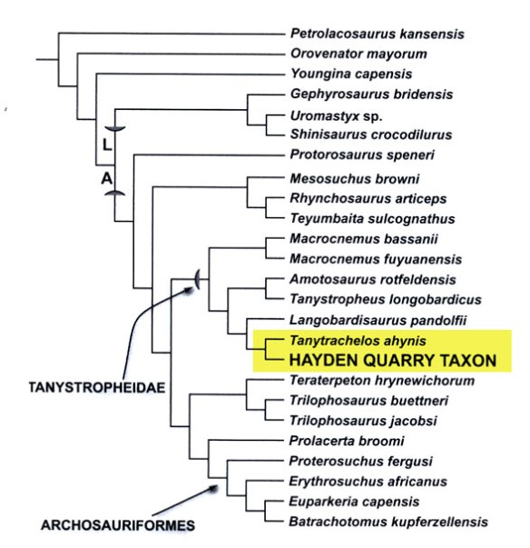 Figure 2. Pritchard et al. tree for Tanytrachelos. There are unrelated taxa here and related taxa are not included. See figure 3.