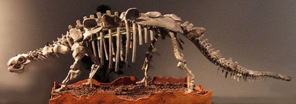 Figure 2. Chrictonsaurus has long legs, tall plates and long legs like a Stegosaurus, but a skull and other armor like an ankylosaur.