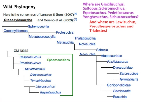 Figure 2. Crocodylomorpha according to Wikipedia.