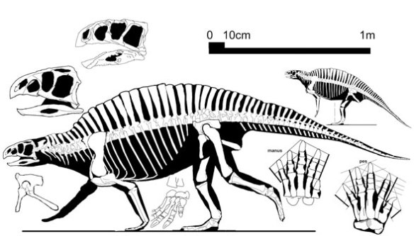 Figure 1. Lotosaurus, a finback poposaur.