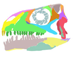 Figure 1. Azendohsaurus skull reconstructed with two premaxillary teeth, not four.