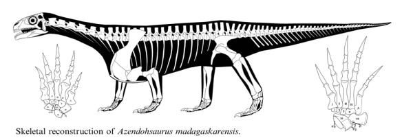 Figure 1. Reconstruction of Azhendohsaurus from Nesbitt et al. 2015. Manus on left. Pes on right.