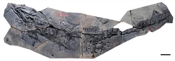 Figure 1. New Xinpusaurus described by Li et al. 2015.