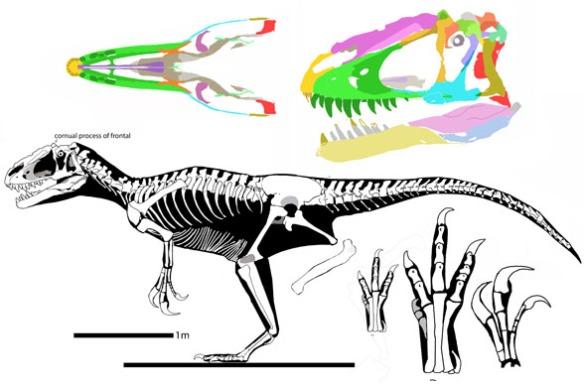 Figure 1. Yutyrannus reconstructed.