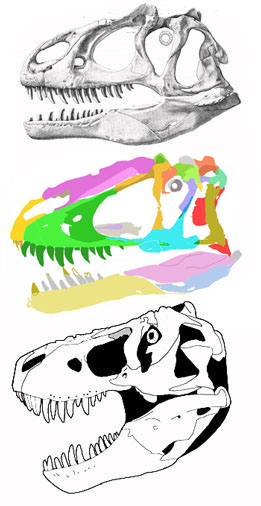 Figure 1. Comparing the skulls of Eutyrannus (center) to Allosaurus (above) and Tyrannosaurus (below). Which one appears to share more traits with Yutyrannus? See text for details. The pink portion of the nasal appears to be a lateral crest, as in Allosaurus. Note the central frontal horn. It is hollow, like that of Majungasaurus.