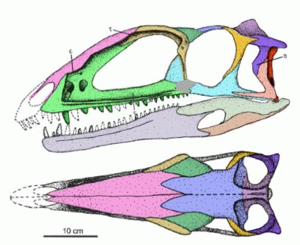 Figure 3. Zupaysaurus nests with Megapsnosaurus as a proto-dinosaur.