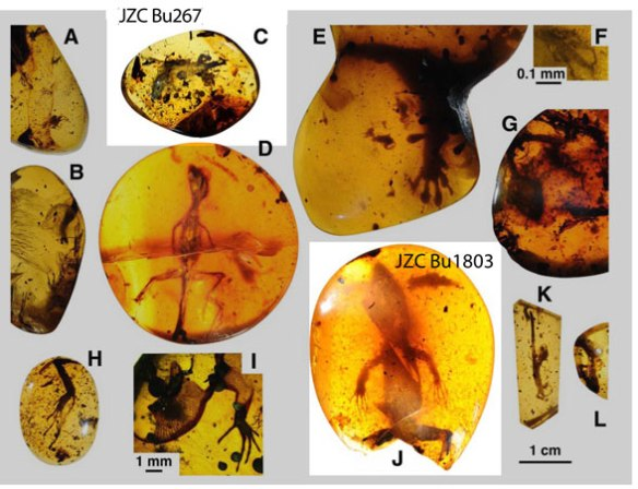 Figure 1. Mid-Cretaceous lizards in amber from Daza et al. 2016. Highlighted specimens are examined here.