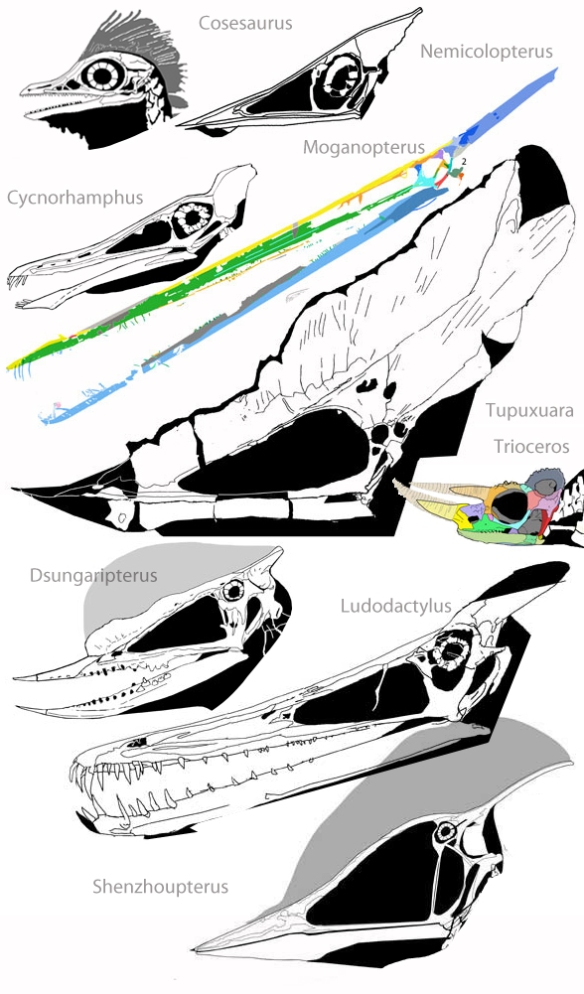Figure 2. Parietal crests on other lepidosaurs, including several often unrelated pterosaurs.