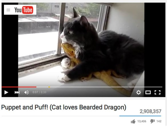 Video 1. Click to play on YouTube. Puppet the cat and Puff the bearded dragon are evidently soul mates.