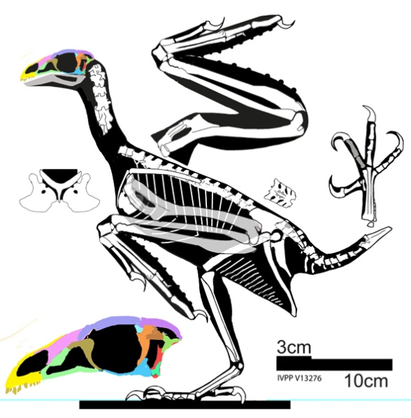 Figure 4. Sapeornis does not nest as a sister to Omnivoropteryx.