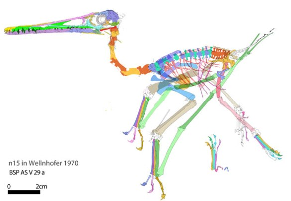 Figure 3. Colored elements of Pterodactylus specimen BSP AS V 29a/b.