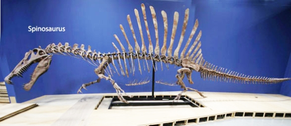 Figure 1. Derived from bipedal sisters, giant Spinosaurus had such short hind limbs that it could no longer rise to a bipedal configuration. Not only did it have a croc-like head, it had something approaching a croc-like post-crania (sans the sail, of course).