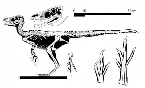 Figure 7. Huaxiagnathus reconstructed in lateral view.