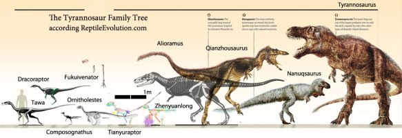 Figure 3. Tyrannosaur ancestors to scale according to the large reptile tree. Drag to desktop to enlarge.