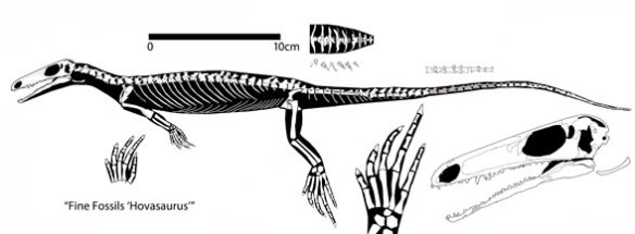 Figure 3. The FineFossils.com specimen traced and reconstructed. This previously unknown specimen nests at the base of the Diapsida, close to Eudibamus, but has an extended rostrum.
