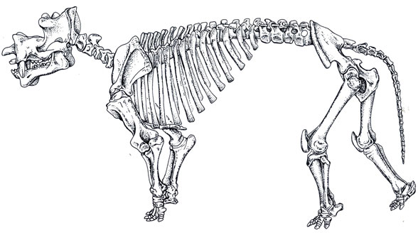 Figure 6. Uintatherium overall. Note the postcranial similarities with Arsinoitherium.