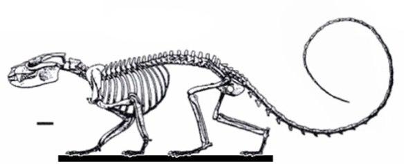 Figure x. Vincelestes overall.