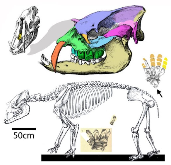 FIgure 1 1. Astrapotherium in several views. This basal condylarth was close to the root of living hippos.
