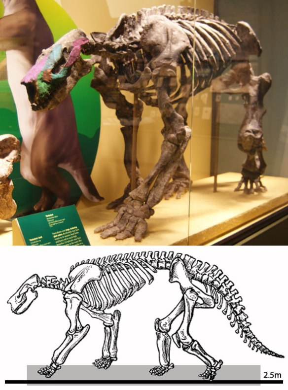 Figure 1. Barylambda looks like a large ground sloth for good reason. It is a sister to the direct ancestor and nests at the base of the Xenarthra along with Orycteropus, the aardvark.