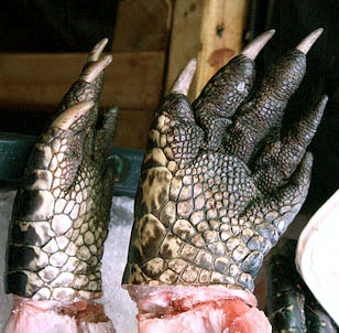 Figure 3. Scaly palms of two crocodilians. Digit 1 is on the left in both specimens.