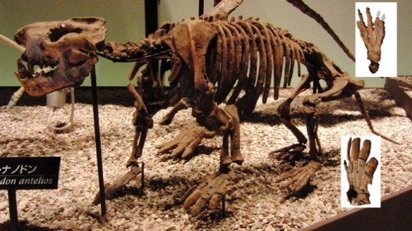 Figure 3. Ernanodon used to nest poorly with pangolin ancestors, but not nests between the creodonts Hyaenodon (figure 4) and Oxyaena (figure 2).