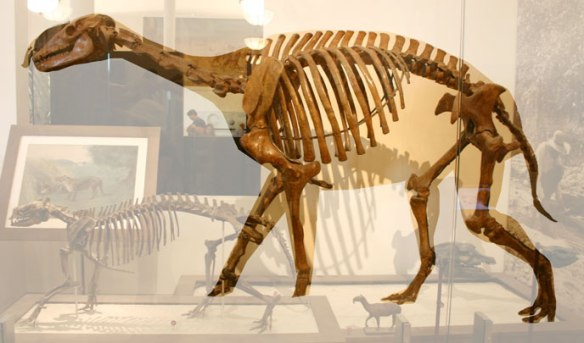 Figure 1. Macrauchenia museum mount.