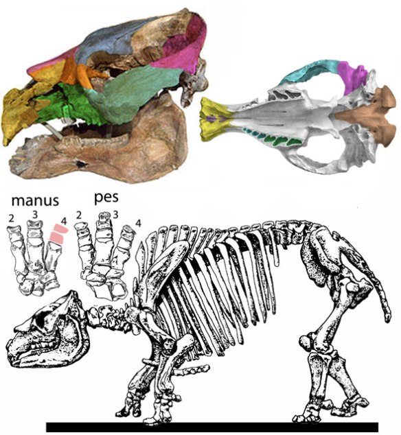 Figure 1. Toxodon was a notoungulate placental. Now it's a wombat marsupial.