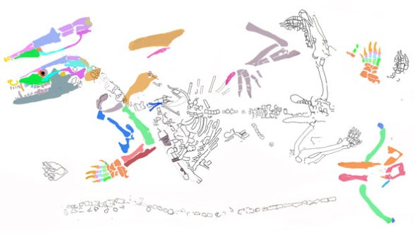 Figure 2. Docofossor partly reconstructed from DGS tracing in figure 1. Here a long tail is recovered along with a few other bones.