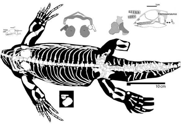 Figure 2. The head of Palacrodon and the headless body of the Majiashanosaurus compared.