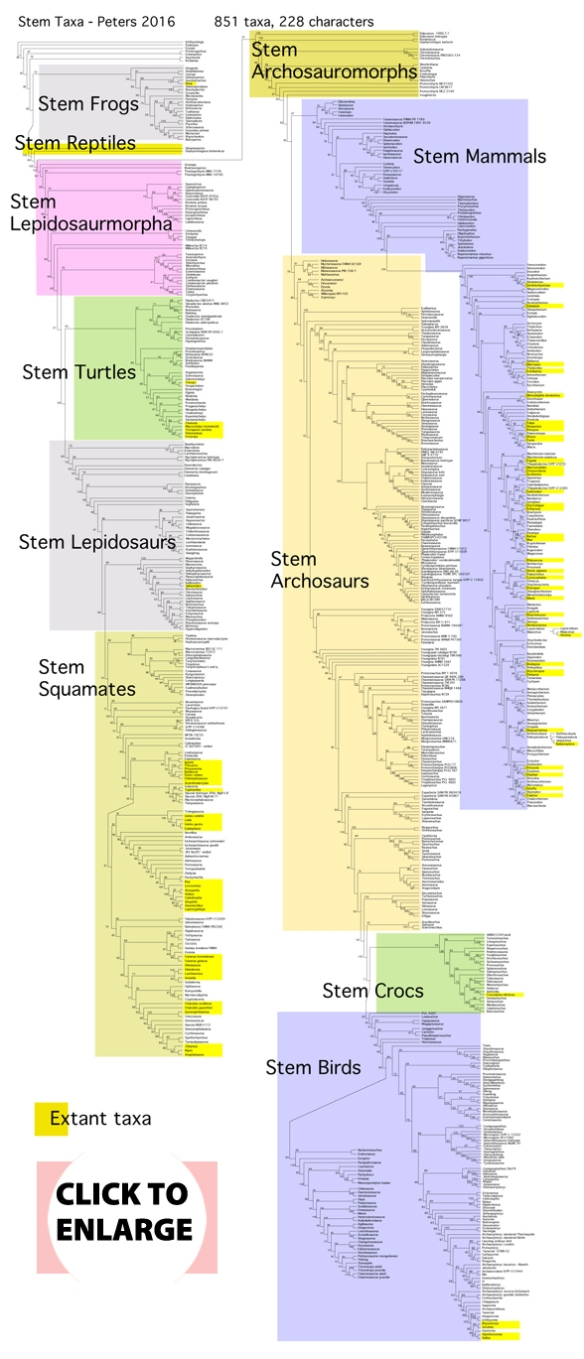 Figure 1. CLICK TO ENLARGE. Stem taxa are closest ancestors to living taxa. Here basal diapsids and marine enaliosaurs are stem archosaurs. Triceratops is a stem bird. Captorhinids are stem turtles. Pterosaurs are stem squamates.