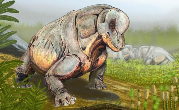 TAPINOCEPHALID DINOCEPHALIANS - LIKE TAPINOCEPHALUS DEPICTED HERE - HAD THICKENED SKULL ROOFS THAT LIKELY HAD A DISPLAY OR COMBAT FUNCTION. THE BIGGEST OF THESE ANIMALS WERE OVER 3 M LONG. CREDIT: DIBDG WIKIMEDIA CC BY SA 3.0 While fascinating, this is not a stem-mammal.