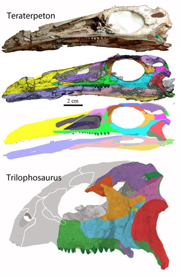Figure 1. Skulls of Teraterpeton and Trilophosaurus compared.