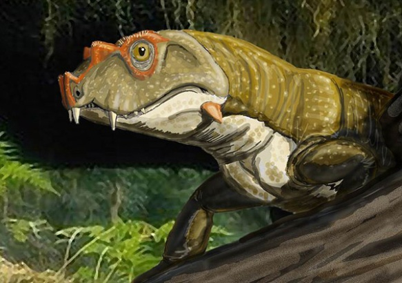 TETRACERATOPS FROM THE EARLY PERMIAN OF THE USA, AN EARLY SYNAPSID SOMETIMES IDENTIFIED AS ONE OF THE OLDEST THERAPSIDS BUT LATER RE-INTERPRETED AS OCCUPYING A MORE ROOT-WARD POSITION IN THE TREE. CREDIT: DMITRI BOGDANOV WIKIPEDIA CC BY 3.0. The LRT nests Tetraceratops with Tsejaia and Limnoscelis, whether it had a lateral temporal fenestra or not. Massive crushing adds doubt to that. It doesn't look like any other synapsid and it nests better with other reptiles, so why include it?