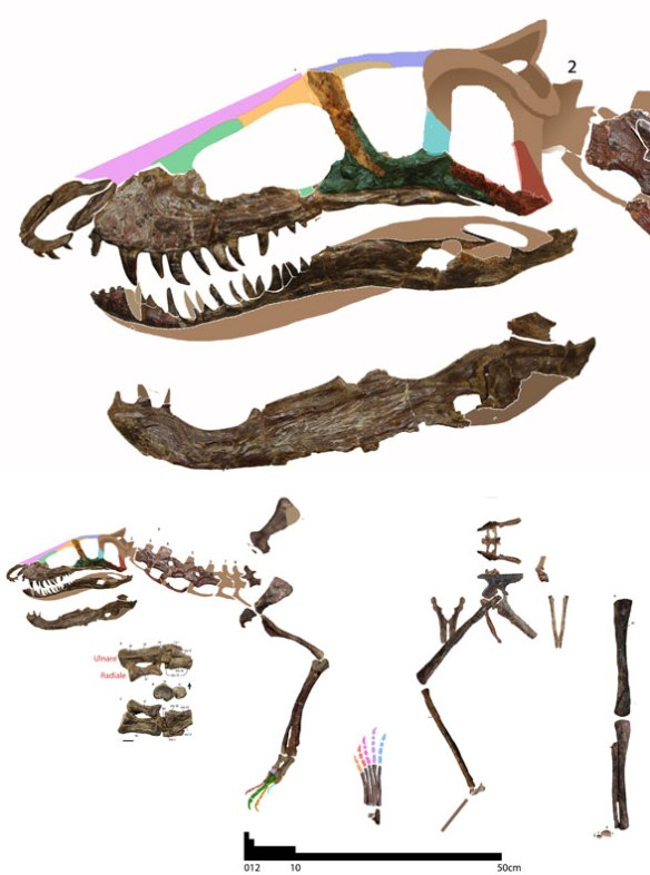 FIgure 2. Assembly of the many Trialestes parts featured in Lecuona et al. 2016. This is an odd combination of robust cervicals and gracile limbs and girdles.