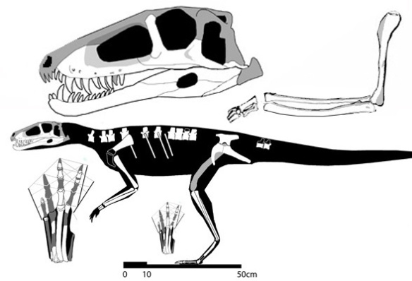 Figure 1. Tracings from old drawings are the data used to create this reconstruction of Trialestes, which nested it basal to the Dinosauria.