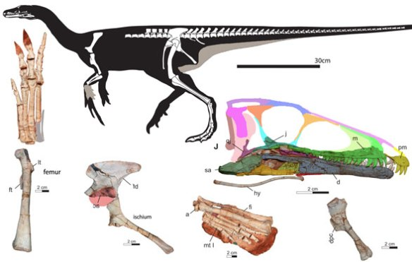 Figure 2. Buriolestes reconstructed along with skeletal elements, some of which have been colorized for segregation.
