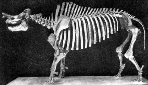 Figure 2. Brontotherium, a sister to Embolotherium.
