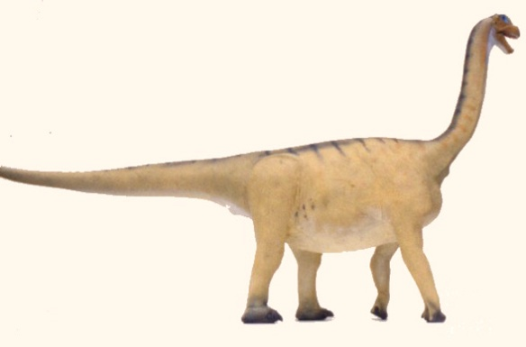 Figure 1. Camarasaurus adult scale model.