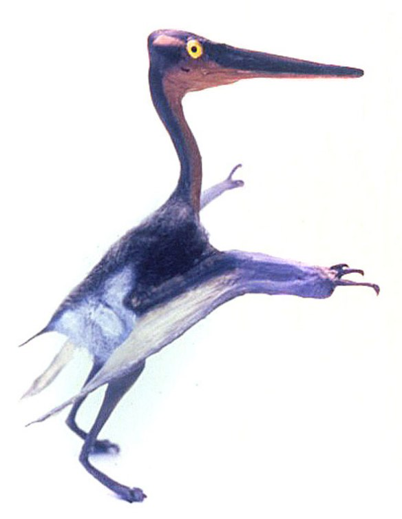 FIgure 6. Pterodactylus scolopaciceps (n21) model. Full scale.