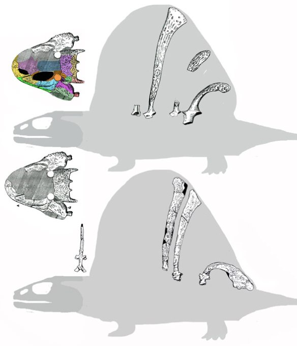 Figure 2. Other Platyhystrix specimens known chiefly from dorsal spines.