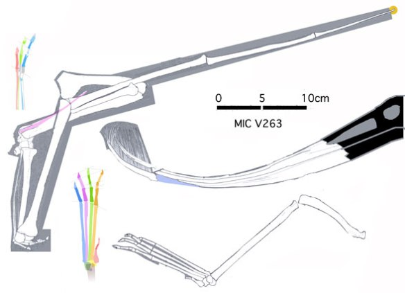 Figure 1. Pterodaustro elements from specimen MIC V263.