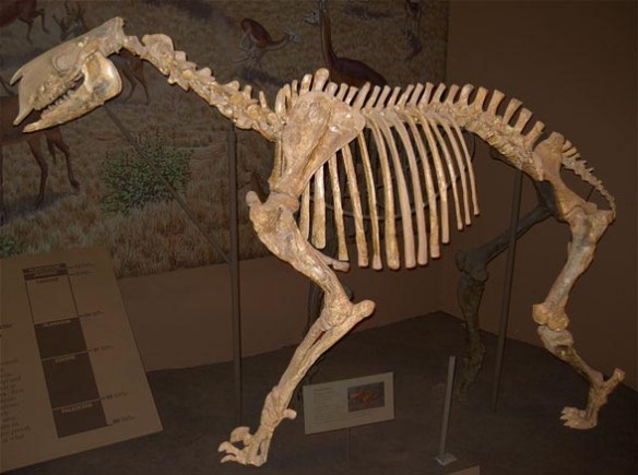 Figure 1. Moropus elatus is a horse-sized chalicothere from the Miocene.