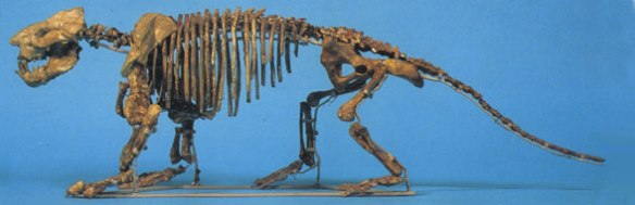 Figure 1. Can you tell what is wrong with this picture of a museum mount of Ernanodon published in Vickers-Rich and Rich 1993?