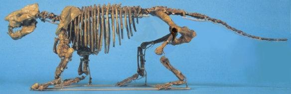 Figure 2. Here is the same museum mount repaired in Photoshop. The pelvis was originally installed backwards. Here the pelvis is correctly mounted.