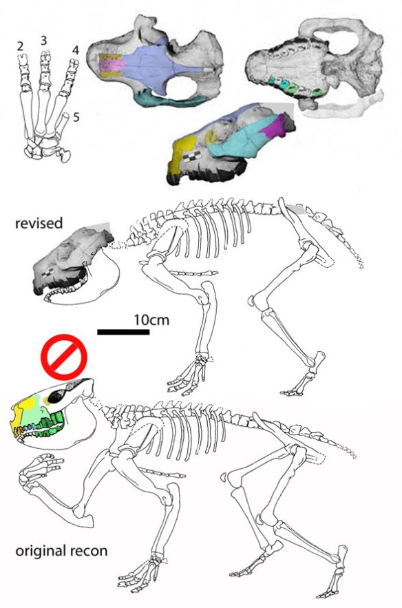 Figure 1. Eurygenium is a smaller, less robust, longer legged version of Toxodon.