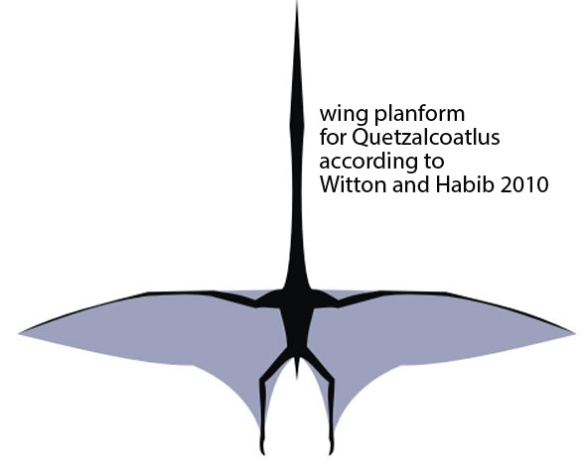Figure 1. Freehand wing planform cartoon for Quetzalcoatlus from Witton and Habib 2010. There is no evidence in any pterosaur for this wing plan.