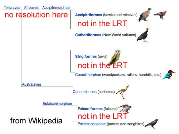 Figure 5. Bird relationships according to Wikipedia with comments in red.