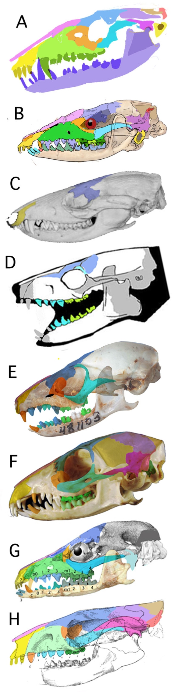 Figure 1. Can you guess which of these taxa evolved to become a human? a killer whale? a rabbit? a giraffe?